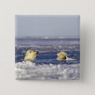 Polar bear cubs playing in pack ice of the 2 inch square button