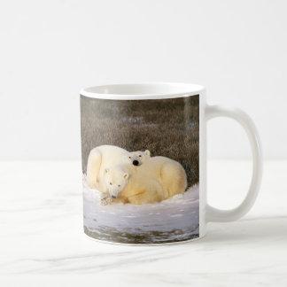 Polar Bear Cup Series