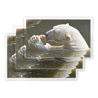 Polar Bear Eating Fruit In Water Acrylic Tray