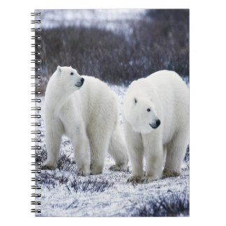 Polar Bear Love Notebooks