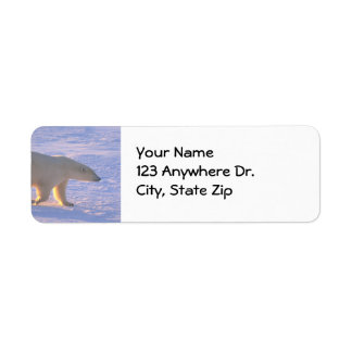 Polar Bear Morn