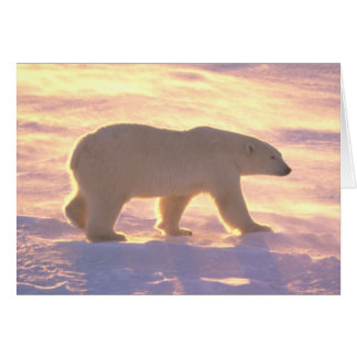 Polar Bear Morn 3 Card