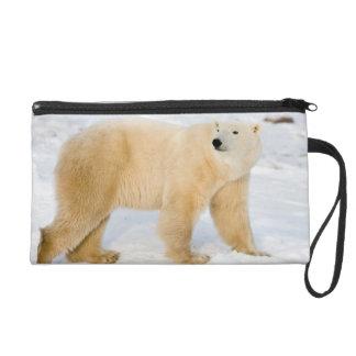 Polar Bear near Hudson Bay 2 Wristlet Clutch
