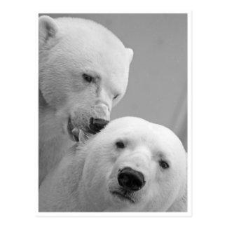 Polar Bear Nibbles Postcard