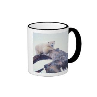 Polar bear on top of a bowhead whale jaw bone, ringer coffee mug