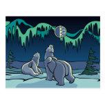 Polar Bear Postcard Native Bear Art Postcards