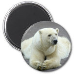 Polar Bear Refrigerator Magnets