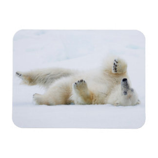 Polar bear rolling in snow, Norway Magnet