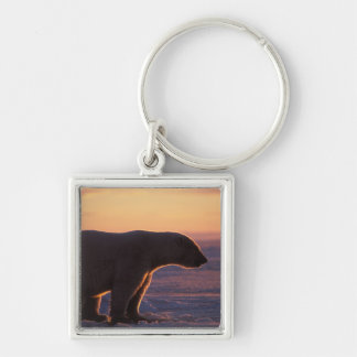 Polar bear silhouette, sunrise, pack ice of Silver-Colored square keychain