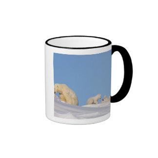 Polar bear sow feeding on grass to get her ringer coffee mug