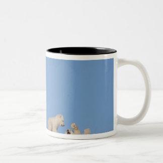 Polar bear sow feeding on grass to get her Two-Tone coffee mug