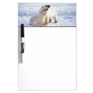 Polar bear sow with cub, pack ice of the Dry-Erase whiteboard