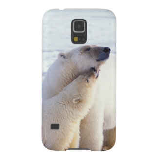 Polar bear sow with cub, pack ice of the galaxy s5 cover