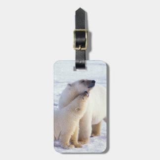 Polar bear sow with cub, pack ice of the luggage tag