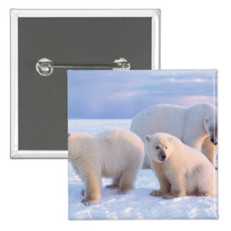 Polar bear sow with cubs on pack ice of coastal 2 inch square button