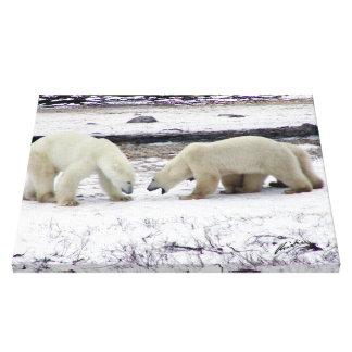 Polar Bear Stand-Off Canvas Prints