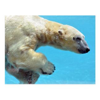 Polar bear swimming underwater postcard