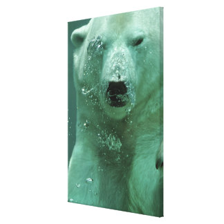 Polar Bear Under Water Canvas Print
