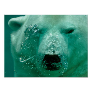 Polar Bear Under Water Poster