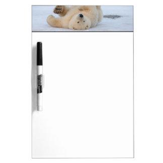 polar bear, Ursus maritimus, cub rolling 3 Dry-Erase Whiteboards