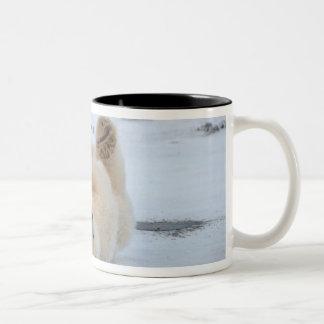 polar bear, Ursus maritimus, cub rolling 3 Two-Tone Coffee Mug