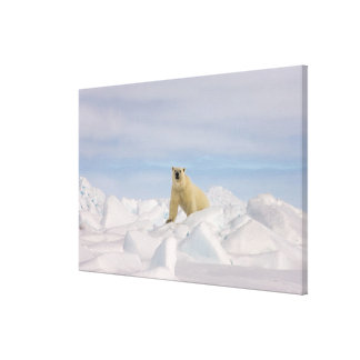 polar bear, Ursus maritimus, in rough ice on Stretched Canvas Print