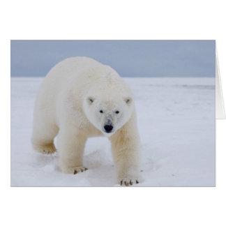 polar bear, Ursus maritimus, on ice and snow, Card