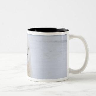 polar bear, Ursus maritimus, on ice and snow, Two-Tone Coffee Mug