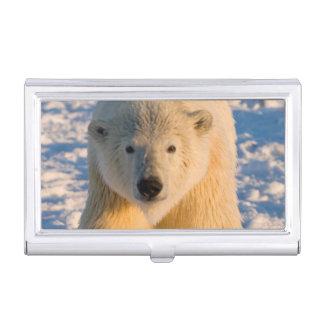 polar bear, Ursus maritimus, polar bear on ice Business Card Cases