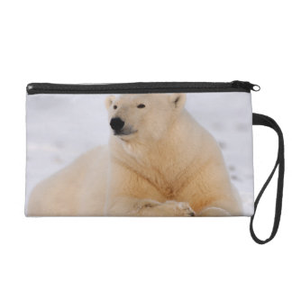 polar bear, Ursus maritimus, resting on the Wristlet Purses
