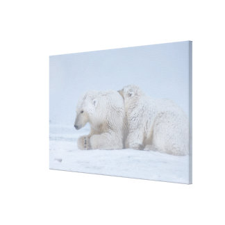 polar bear, Ursus maritimus, sow with cub Gallery Wrapped Canvas