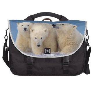 polar bear, Ursus maritimus, sow with cubs Computer Bag