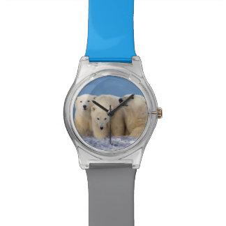 polar bear, Ursus maritimus, sow with cubs Watch