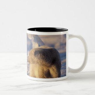 polar bear, Ursus maritimus, with Two-Tone Coffee Mug