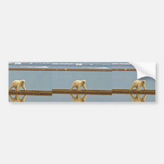 Polar bear walking along the coast bumper sticker