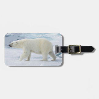 Polar bear walking, Norway Luggage Tag