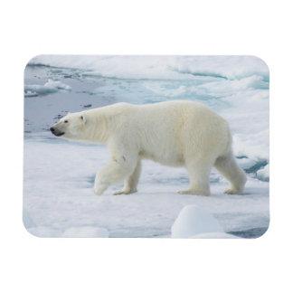 Polar bear walking, Norway Rectangular Photo Magnet