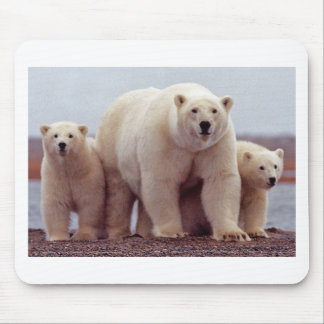 Polar Bear With Cubs 02 Mouse Pad