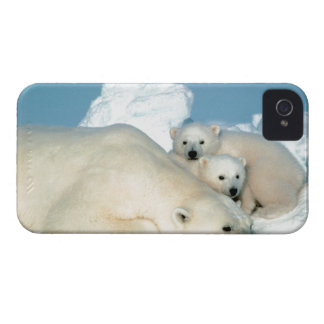 Polar Bear With Cubs Blackberry Bold Case