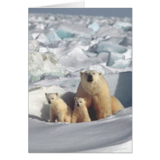 Polar Bears Arctic Wildlife Blank Greeting Card