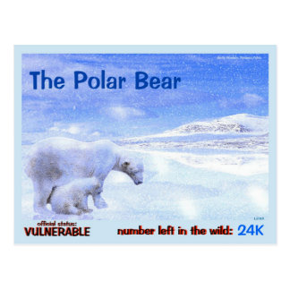 Polar Bears are Endangered, quick read this: Postcard