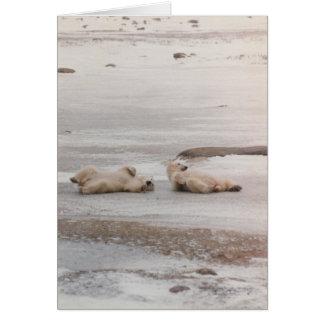 polar bears at the beach card