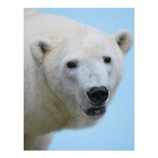 Polar bears profile letterhead design