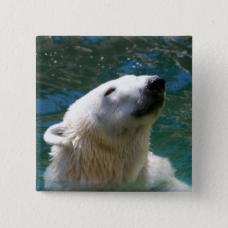 Polar bears smile 2 inch square button