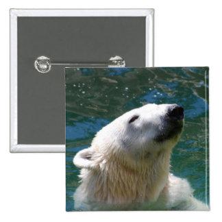 Polar bears smile 2 inch square button