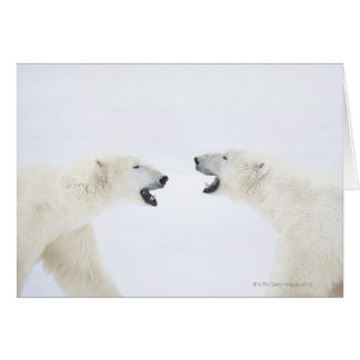 Polar Bears standing on snow after playing Card