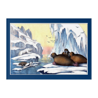 Polar Bears, Walrus, and Seals Acrylic Print