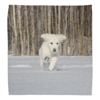 Polar Puppy Bandanas