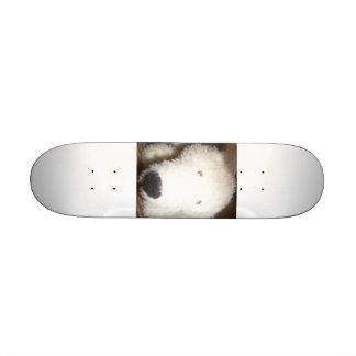Polar Skate Board