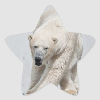 Polarbear walking star sticker